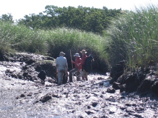 David Johnson, David Kimbro and Forest Schneck sample plant densities on a peat reef.